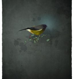 bellbird_large