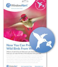 hummingbird_decal__38561.1460071523.1280.1280